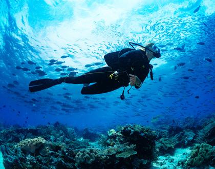 Croisière et plongée sous-marine